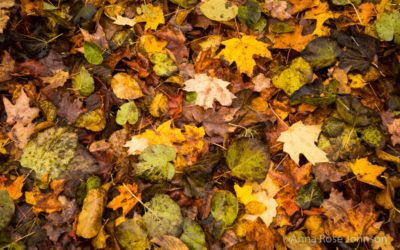 Orange Maples, Vintage Books, and Other Exciting News